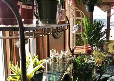 Allied-Nursery-Joliet IL-TROPICALS-AND-ALOES